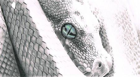 Snake by donotseeme