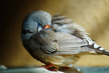 tired birdy by moonshadowgirl