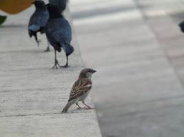A Life Of Birds