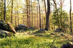 Pine Forest Stock 9