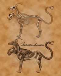 Chimera Anatomy by gidb7