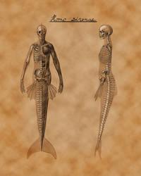 Mermaid Anatomy by gidb7