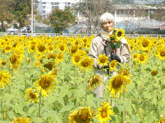 Sunflower Field by Laudamus