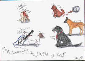 MCR at dogs by It-is-Madness