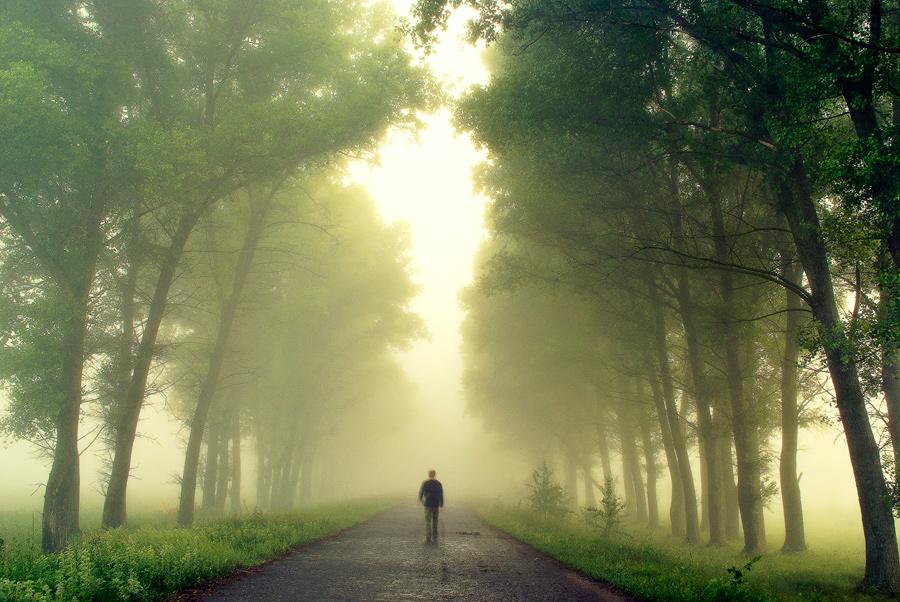 Misty morning III by mannromann