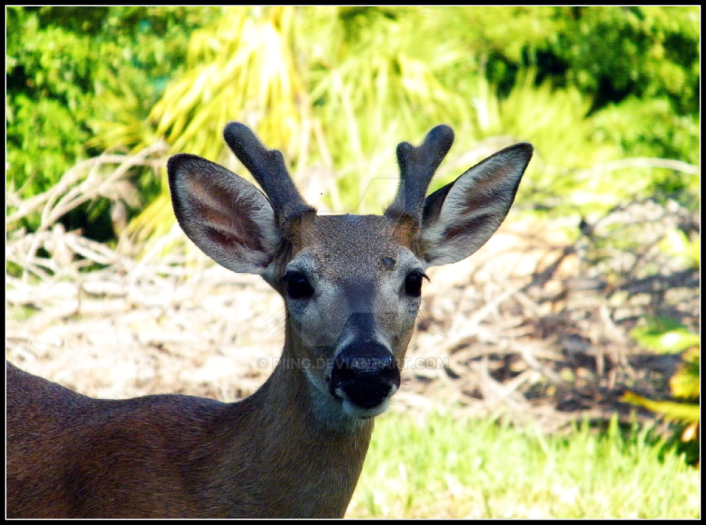 Young Buck by Piing