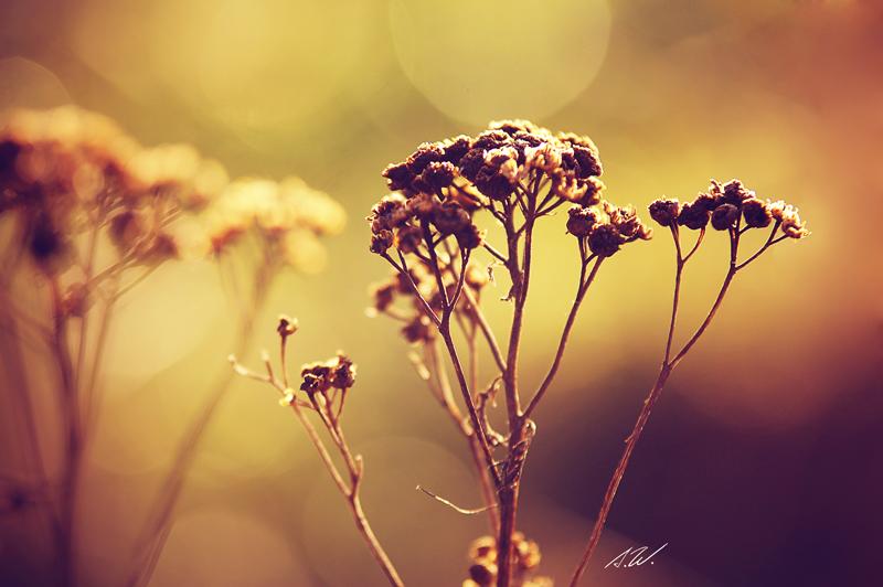 .grow. by awphotoart