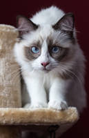 .purr. by awphotoart