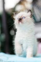 .kitty. by awphotoart