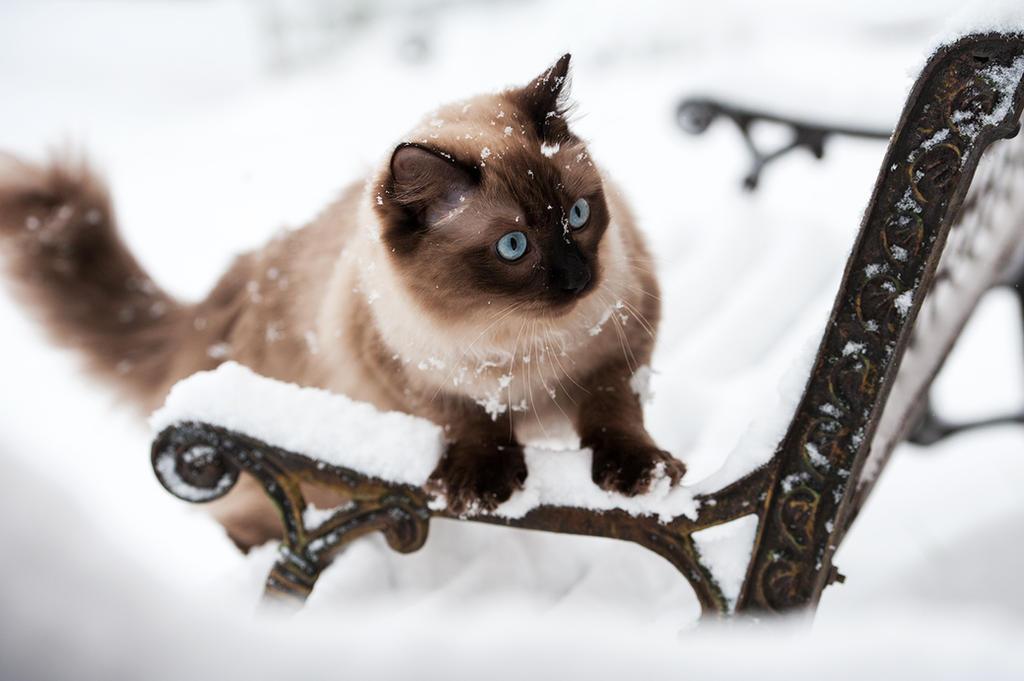 snowy Nea by awphotoart
