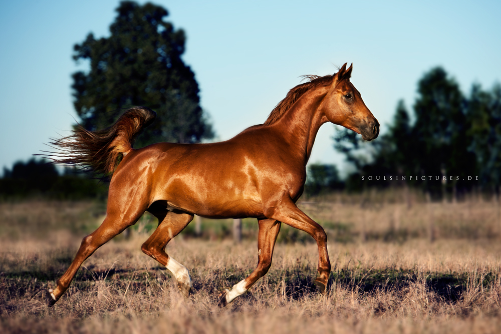firehorse by awphotoart