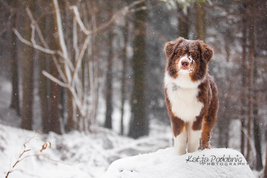 Winter is coming...it's already here! by Sensenfrau