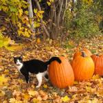 Fall Kitty by pandz0rz
