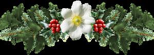 mistletoe PNG