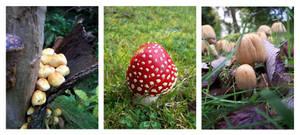 mushrooms by Eshia