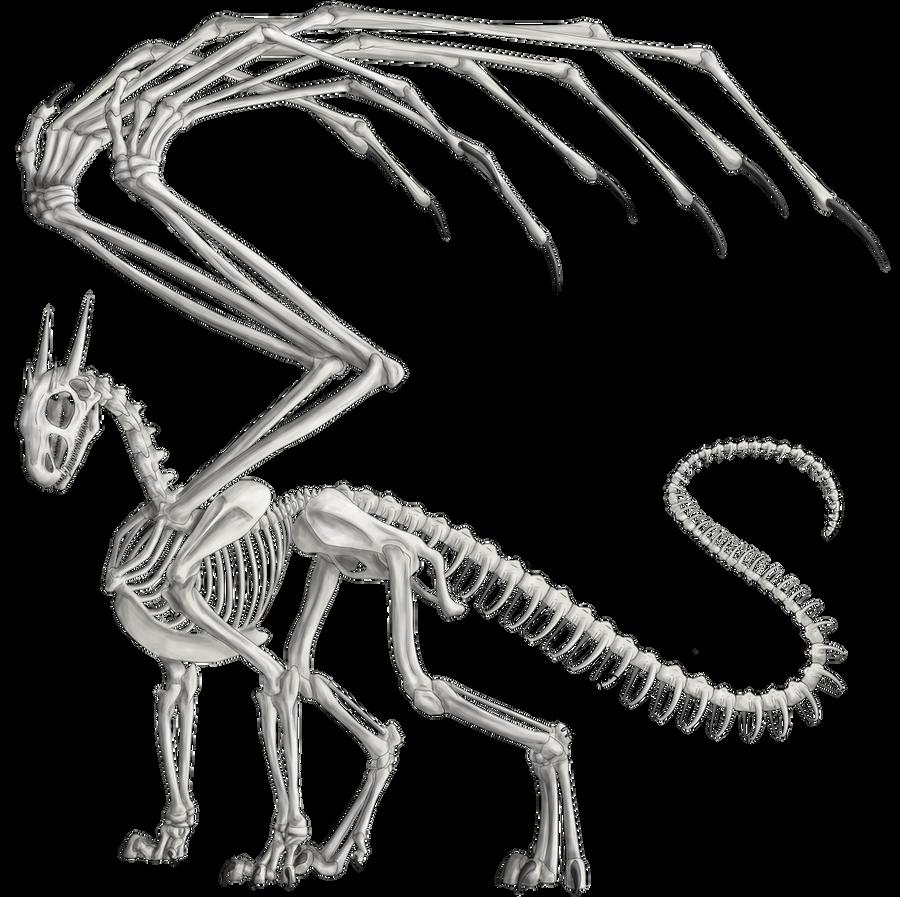 Anatomy study-Skeleton by 768dragon on DeviantArt