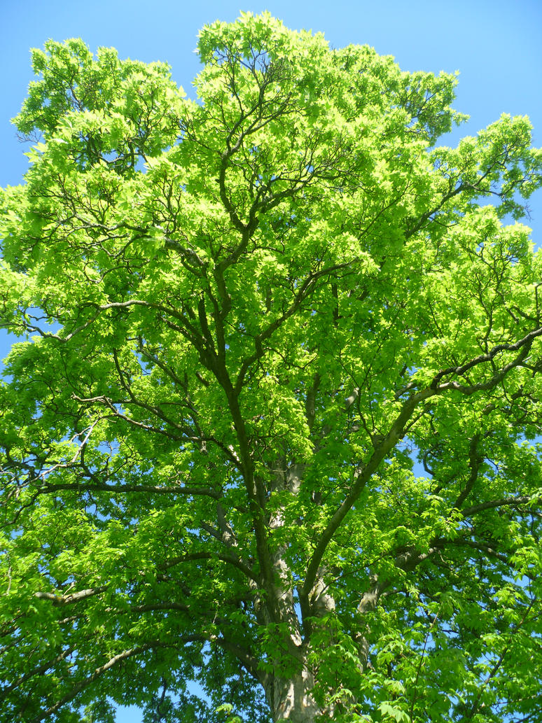Green tree with blue sky by soph art lover on deviantart green tree with blue sky by soph art lover izmirmasajfo