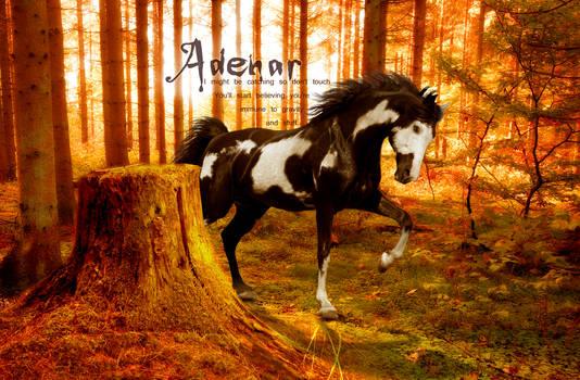 Request -- Adenar