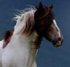 Dregos Avatar by HorseWhisperer101