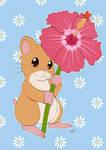 Hamster Hibiscus