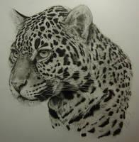 Jaguar by Dhekalia