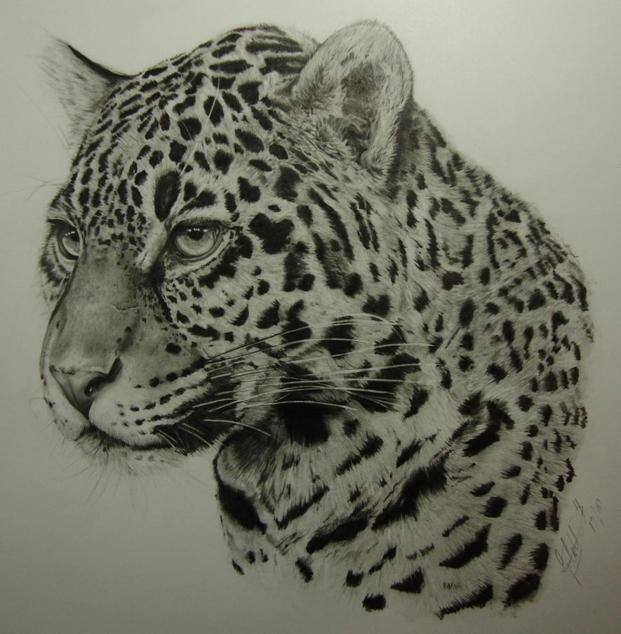 jaguar drawing - photo #10