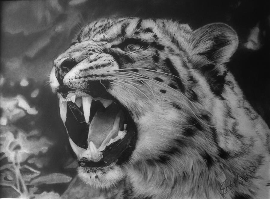 Snow Leopard Snarl - Reworked by Dhekalia
