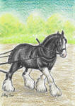 Shire horse in work