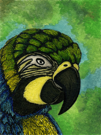 parrot by kalamate