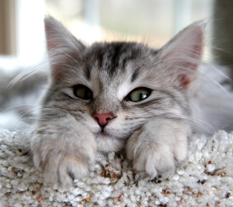 Kitten no. 1 by Mischi3vo