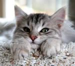 Kitten no. 1