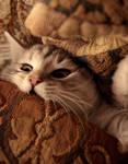 When Good Kitties Go Bad no. 1