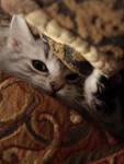 Hidden Kitten no. 1