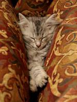 Sleeping Kitten no. 2 by Mischi3vo