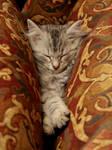 Sleeping Kitten no. 2