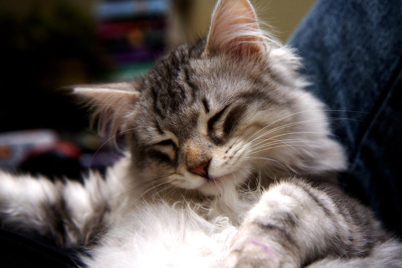 Kitten, Bandit no. 8 by Mischi3vo