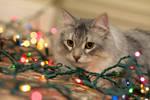 Christmas Lights no. 3