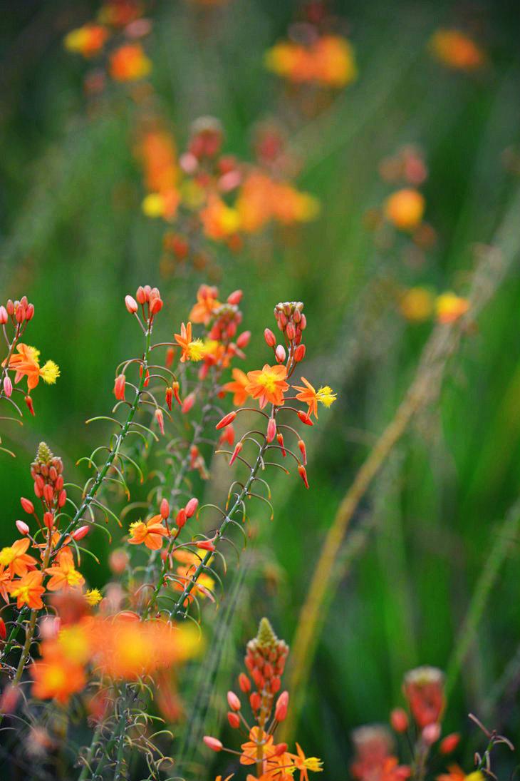 Orange fields by SemioticPhotography