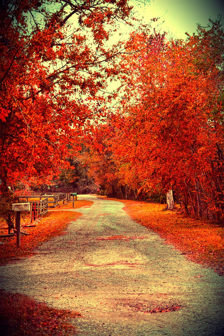 Fall by SemioticPhotography