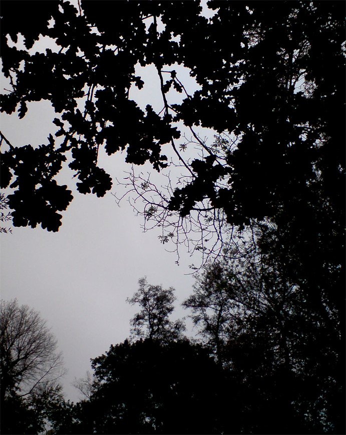 Oak Silhouette by darkhoodness