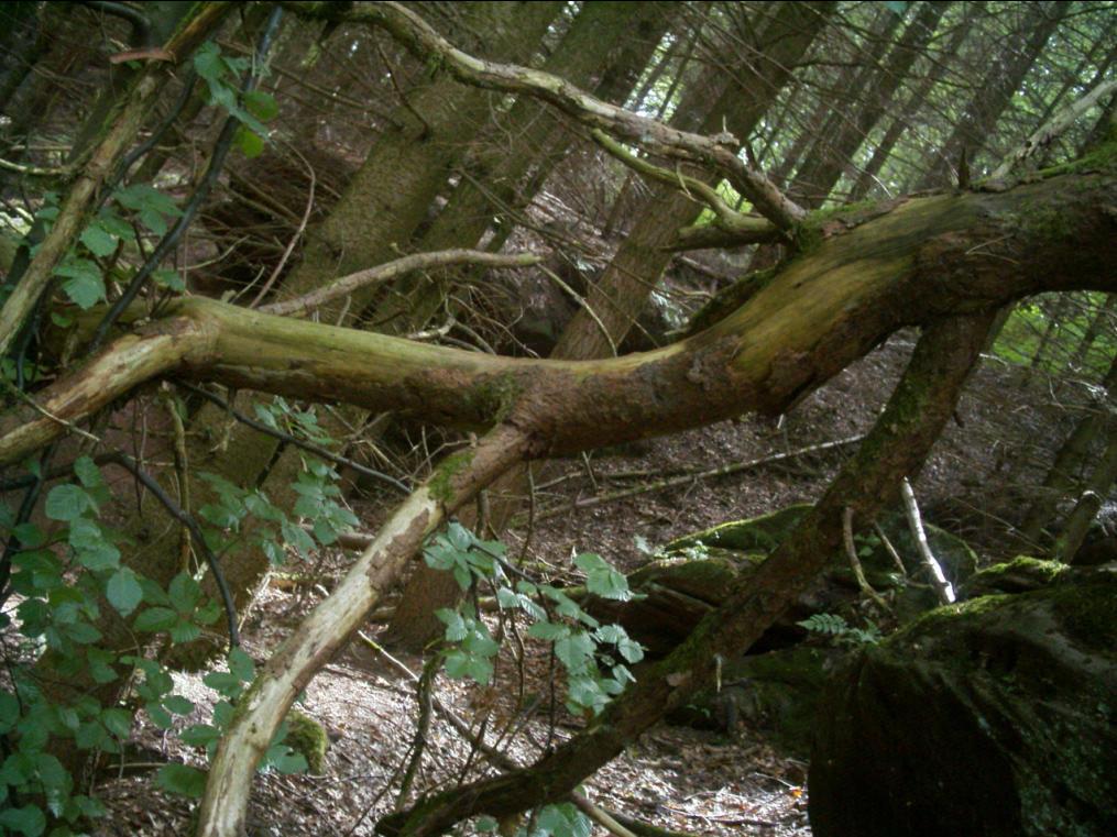 Fallen Tree Branch by darkhoodness on DeviantArt