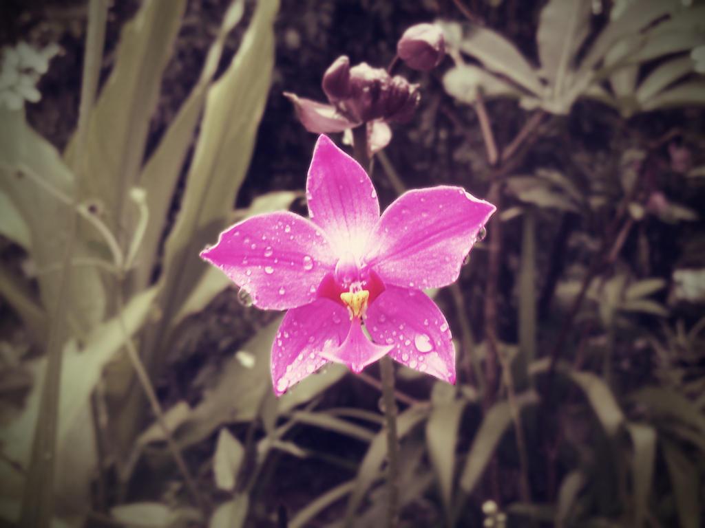 Orchid by faragona