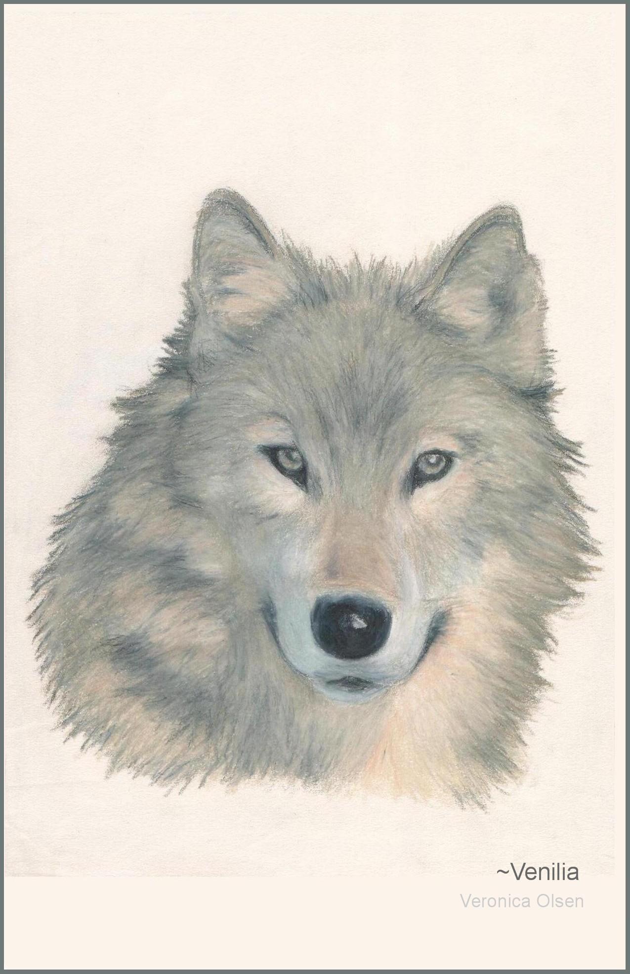 Wolf 2 by Venilia