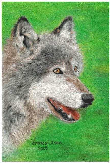 pastel wolf by Venilia