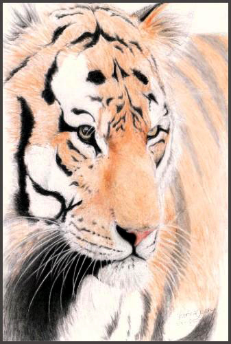 The Tiger by Venilia