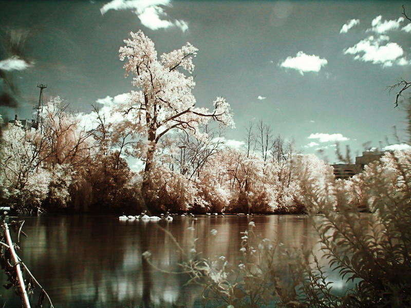 Infrared Lake by electricjonny