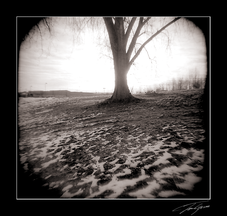 holga sun behind tree by electricjonny