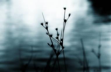 blue plant by electricjonny