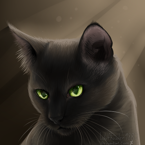 Top Images For Warrior Cats Hollyleaf On Picsunday 01 12 2018 To 0234