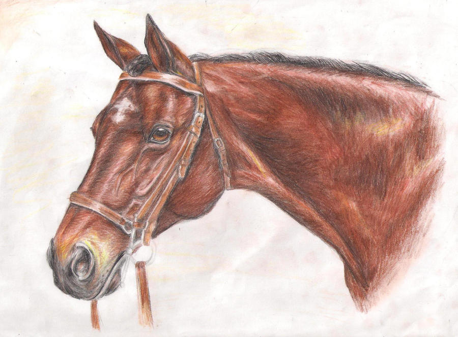 Brown Horse by LittleHercy